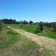 Prendre à gauche le chemin au milieu des vignes