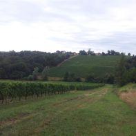 Les vignes au Broussey