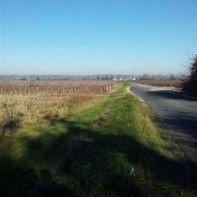 vignes bordant la route
