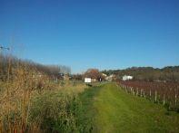 des vignes vers le pont de Langoiran