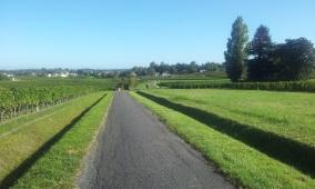 Une petite route bucolique vers Cantemerle